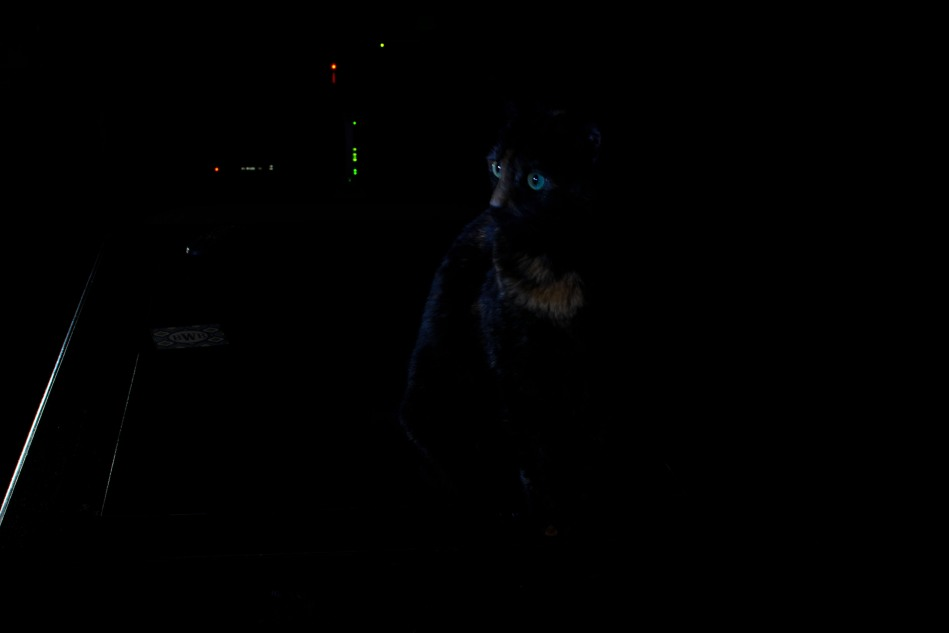 light painting photography - my tortie, Stella